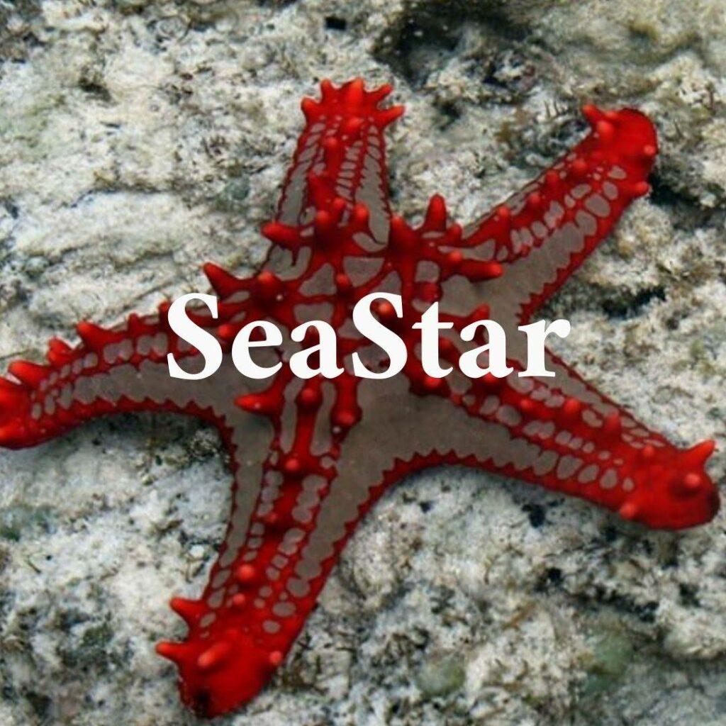 the seastar tienda online