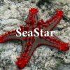 The.seastar-1